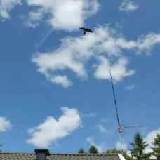Fågelskrämma | Komplett Fågelskrämma Höken