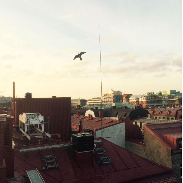 Fågelskrämma | Komplett Fågelskrämma Höken med extra drake